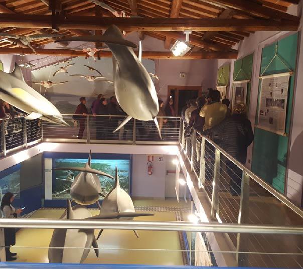 Gli interni del museo - Visita guidata