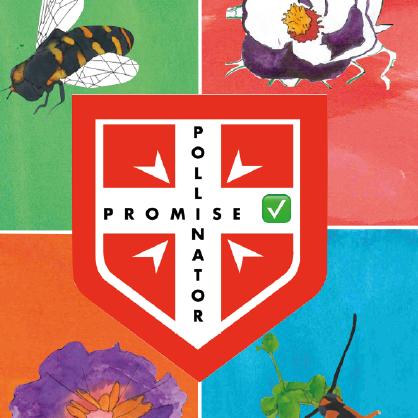 Polli:Promise